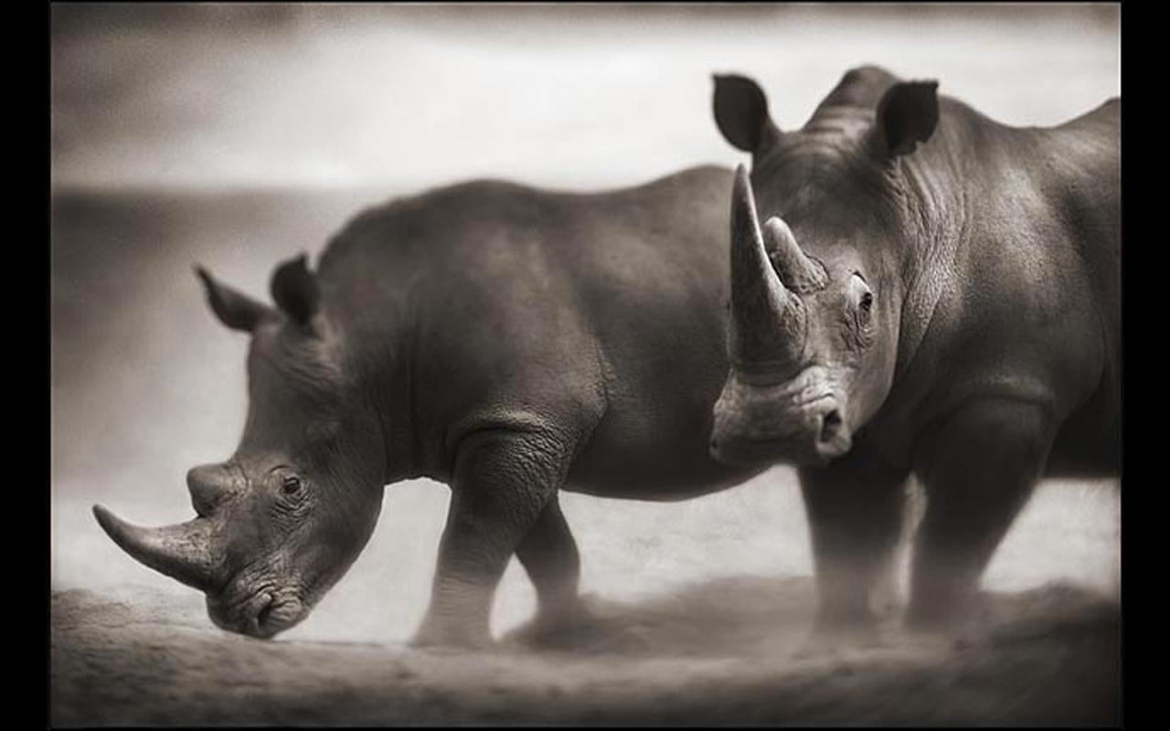 The Rhino - Investor Profile